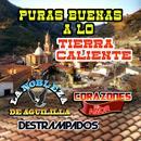 Puras Buenas A Lo Tierra Caliente thumbnail