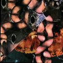Origin Of The Species Volume Too! - Third Tablet Of Acid thumbnail