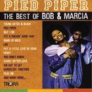 Pied Piper (The Best Of Bob & Marcia) thumbnail