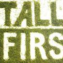Tall Firs thumbnail